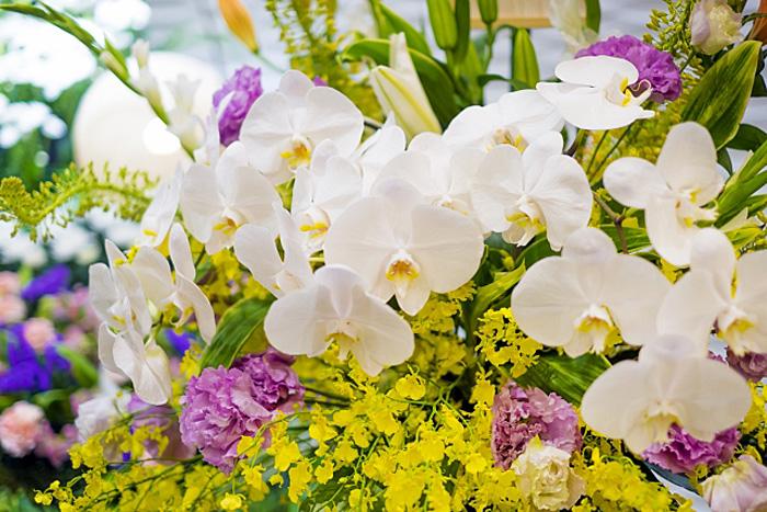 胡蝶蘭 花束