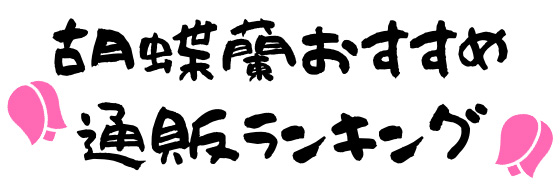 胡蝶蘭おすすめ通販ランキング2020【ギフトやお祝いに最適】