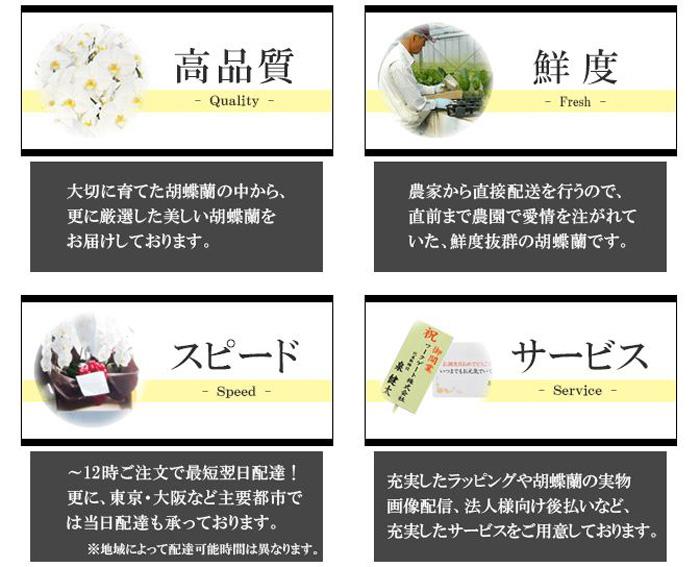 胡蝶蘭園 特徴